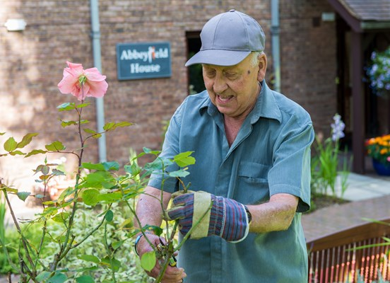 Resident pruning a pink rose in the garden at Abbeyfield House, Great Missenden