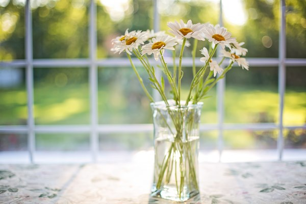 A vase of daisies placed in front of a window