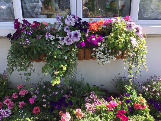 Window box in full bloom at Abbeyfield House