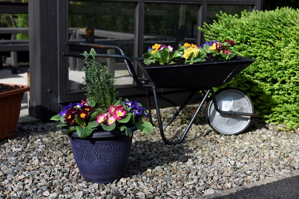 Close up of a planter with flowers and a small wheelbarrow full of pansies