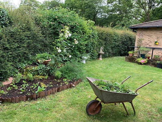 Hedges, raised flower bed, plants and wheelbarrow in the garden